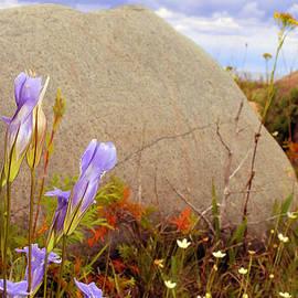 Nina Silver - Rock the Meadow Flowers