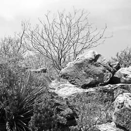 Louis Nugent - Rocks of San Angelo