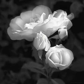 Jennie Marie Schell - Romantic Roses Black and White