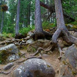 Roots and Rocks by Mo Barton