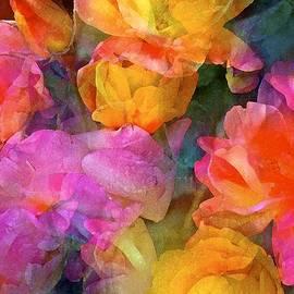 Rose 224 by Pamela Cooper