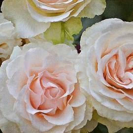 Rose 292 by Pamela Cooper