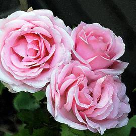 Rose 3 by Helene U Taylor