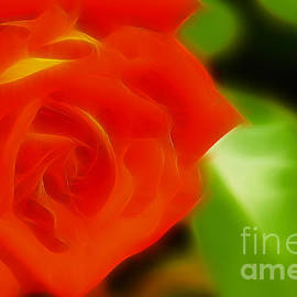 Gary Gingrich Galleries - Rose 6118-Fractal
