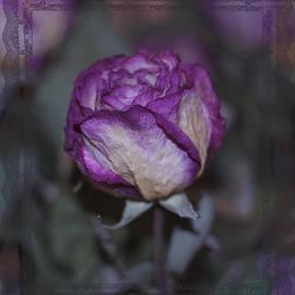 Sandra Foster - Rose Beauty After