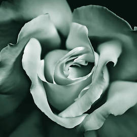 Rose Flower in Shades of Green by Jennie Marie Schell