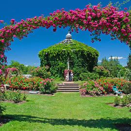Rose garden by David Freuthal