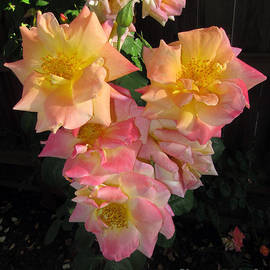 Debra Thompson - Rose Heart