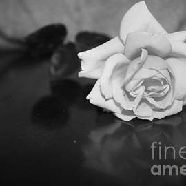 Rose Reflection by M Valeriano