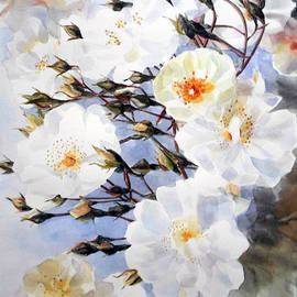 Greta Corens - Wartercolor of white roses on a branch I call Rose Tchaikovsky