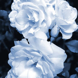 Roses are Blue by Jennie Marie Schell