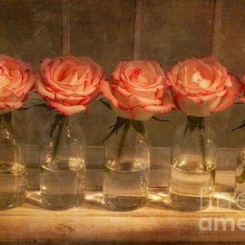 Roses in a Row by Ann Garrett