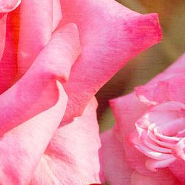Alexander Senin - Roses Of Pink