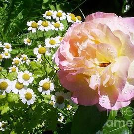 Rosy Shades I by Anna Yurasovsky