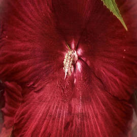 Rene Crystal - Ruby Red Hibiscus