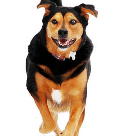 Christina Rollo - Running Dog Art