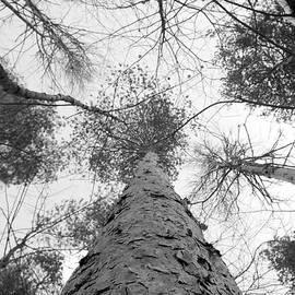 Kendra DeBarr - Rustic Pines