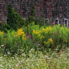 Rustic Wildflowers by Bill Wakeley