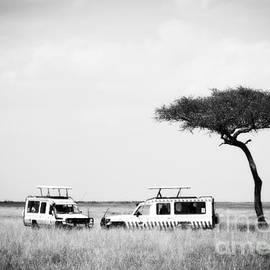 Safari Dream by Chris Scroggins