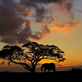 Tony Beck - Safari Sunset