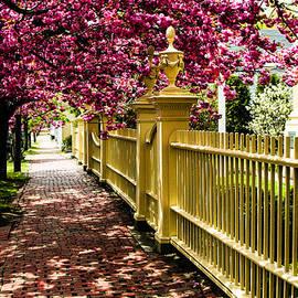 Salem walkway shrouded by spring flowers by Jeff Folger