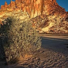 Peter Kneen - Salt Bush on Clay Pan at Rainbow Valley