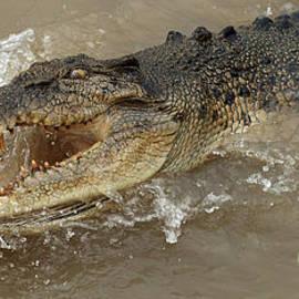 Bob Christopher - Saltwater Crocodile