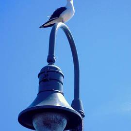 Don Struke - San Clemente Sea Gull
