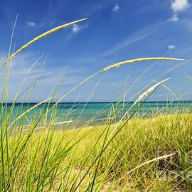 Sand dunes at beach by Elena Elisseeva