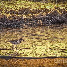 Marvin Spates - Sand Piper