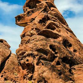 Sandstone Husky by Robert Bales