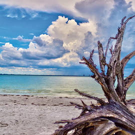 Sanibel Island Driftwood by Timothy Lowry