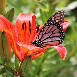 Ryan Crouse - Saskatchewan Prairie Lily and Butterfly