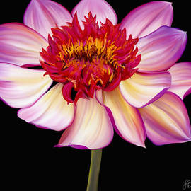 Satin Flames by Laura Bell