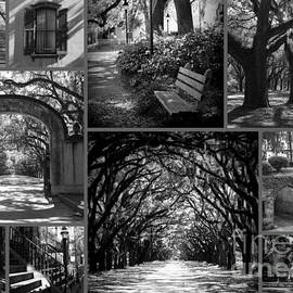 Carol Groenen - Savannah Shadows Collage