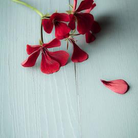 Jan Bickerton - Scarlet Geranium