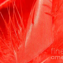 Scarlet1 by Lali Kacharava