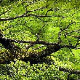 SCENT of GREEN by Karen Wiles