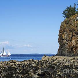 Diane Diederich - Schooner sailing in the bay