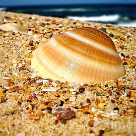 Sea beyond the Shell