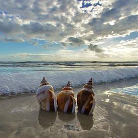 DM Photography- Dan Mongosa - Sea Crown Jewels