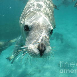 Sea lion by Crystal Beckmann