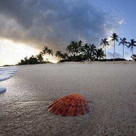 Sea Shell Sunrise by Sean Davey