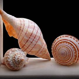 Krasimir Tolev - Sea Shells