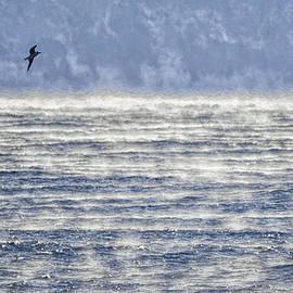 Marty Saccone - Sea Smoke and Gull Blues