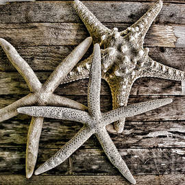 Sea Stars by Colleen Kammerer
