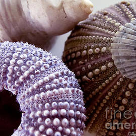 Sea Urchins  by Colleen Kammerer