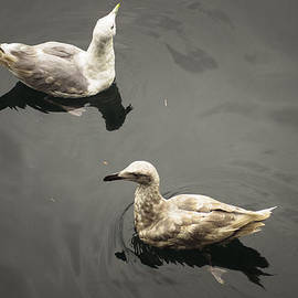 Seagull #7 by Chad Sedam