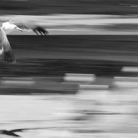 Seagull in Santa Barbara by Nicole Swanger