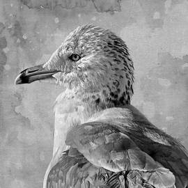 Seagull Portrait by HH Photography of Florida